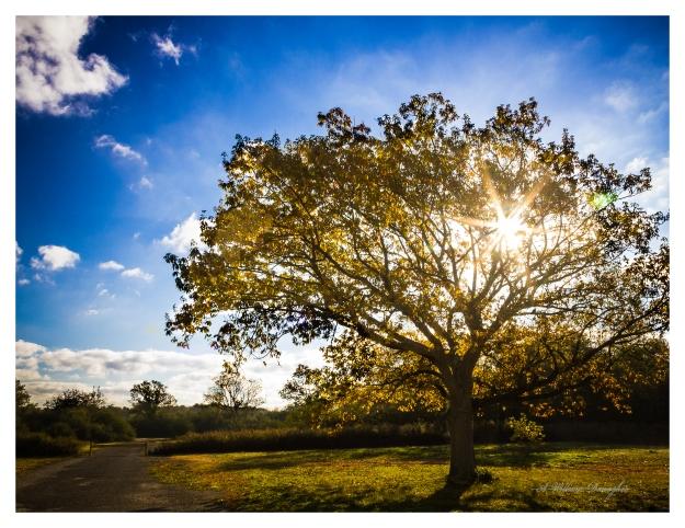 Autumn Tree 3