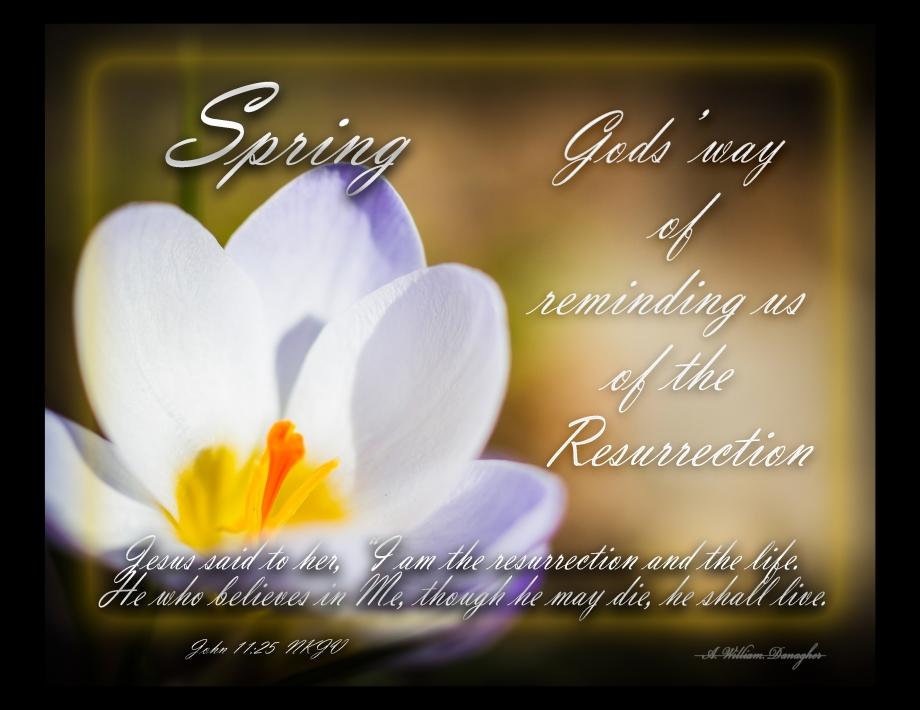 Spring John 11 25